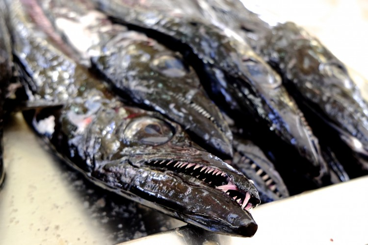 Skabbard Fish