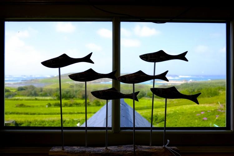 Fish in Window