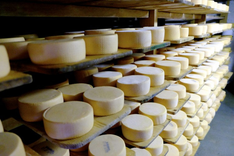 Cheeses in Cellar