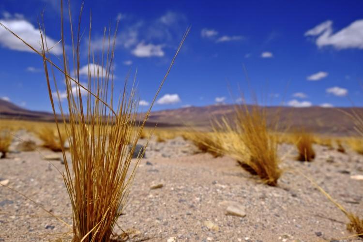Desert low shot