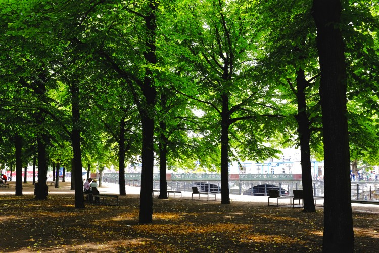 Museum Island Trees
