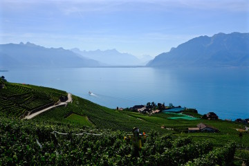Vineyard, Lake, Mountains